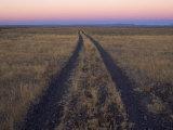 Tire Tracks Leading Thorough a Field of Sagebrush Photographic Print by Joel Sartore