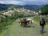 Oxen Pulling a Cart Follow a Farmer as He Walks Homeward Photographic Print by Walter Meayers Edwards