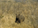 Portrait of an Aggressive Black Rhinoceros Photographic Print by W. Robert Moore