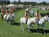 People Parade Purebred Horses and Cattle at Annual Agricultural Show Photographic Print by Howell Walker