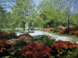 Car Travels Down Azalea-Lined Driveway of a Government Facility Photographic Print by Willard Culver