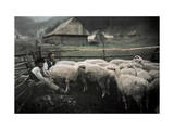 Gorals Tend to their Corralled Flock Photographic Print by Hans Hildenbrand