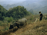 Boy Plowing a Hillside Field Guides His Bull with a Single Rein Photographic Print by Joseph Baylor Roberts