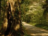 Shade-Dappled Dirt Road Through Lush Forest Photographic Print by Raymond Gehman