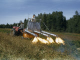 Before Harvest Men Kill Potato Vines with Tractor-Drawn Flame Thrower Photographic Print by Howell Walker