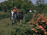 Tourists Ride Horses Past Blooming Azaleas Photographic Print by Robert Sisson