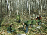 Vermonters Pick Wild Ferns in Autumn to Sell to Florists Photographic Print by Robert Sisson