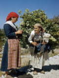 Old Woman Carrying Heavy Bundle of Grapevines Talks to Woman Knitting Photographic Print by Volkmar K. Wentzel