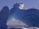 Kittiwakes Resting Atop an Iceberg with a Natural Arch Papier Photo par Norbert Rosing