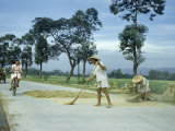 Farmer Sweeps Rice on Cement Road, Letting Passing Traffic Thresh It Photographic Print by Joseph Baylor Roberts