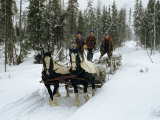 Loggers Haul Freshly Cut Timber on a Horse-Drawn Sleigh Photographic Print by B. Anthony Stewart