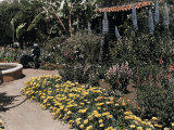 Famous Garden Located in San Diego Photographic Print by Charles Martin