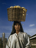 Silkworm Cocoons Tumble Out of Basket a Woman Carries on Her Head Photographic Print by Volkmar K. Wentzel