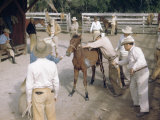 Cowboys Surround a Colt Being Branded in a Corral Photographic Print by Howell Walker