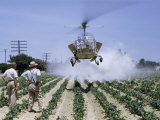 Men Watch Hovering Helicopter Spray Insecticide on Pepper Field Photographic Print by Robert Sisson