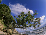 Tree Leaning over the Beach on the Beach at Ruegen Island Photographic Print by Norbert Rosing