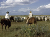 Cowboys Drive a Herd of Brahman Cattle across Texas Range Photographic Print by Howell Walker