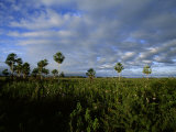 Landscape Picture in an Area of Brazil Where Jaguars Frequent Photographic Print by Steve Winter