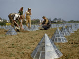 Farmers Work Near Glass Pyramids Covering Vegetable Marrow Plants Photographic Print by B. Anthony Stewart