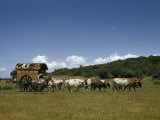 People, Oxen, and Horses Reenact Frontier Scene of Travel by Coach Photographic Print by Luis Marden