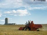 Men Driving Combine Harvest Wheat Near State Capitol Building Fotografisk trykk av Joseph Baylor Roberts