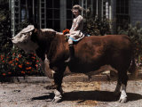 Young Girl Sits on a Hereford in Pleasanton Photographic Print by Charles Martin