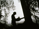 Helmeted Logger Preparing to Fell a Tree with a Chainsaw Photographic Print by Chris Johns