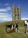 Cattle Graze on a Hilly Pasture Near Broadway Tower Photographic Print by Melville Grosvenor