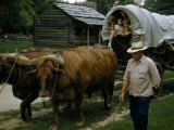 Man Guides Oxen Pulling Children in Covered Wagon at Historical Site Photographic Print by William Gray