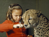 Cheetah Licks Ice Cream from a Spoon Held by a Young Girl Photographic Print