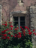 Roses Growing around the Window of an Old House in Provence, France Photographic Print by Jim Sugar