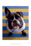 Frenchie Beau Prints by Robert Mcclintock