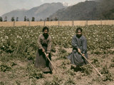 Two Women Hoe Potatoes in a Field in Peulla Photographic Print by Jacob Gayer