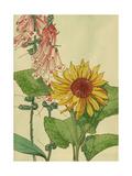 Sunflower and Foxglove Prints