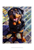 Handsome Rottie Poster by Robert Mcclintock