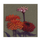 Zinnia Flower Art