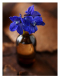 Delphiniums in Bottle Photographie