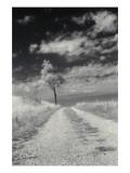 Roadside with Tree Photo