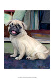 Baby Pug Posters by Robert Mcclintock