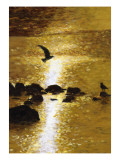 Seagull Flying over Water Print