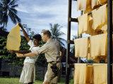 Men Examine Sheets of Rubber Fresh from a Smokehouse Fotografisk trykk av Joseph Baylor Roberts