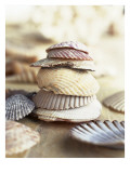 Colored Seashells Posters