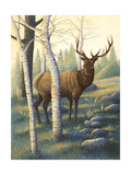 Deer in Nature Posters
