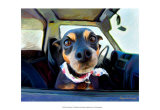 Little Dobie Prints by Robert Mcclintock