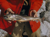 Man Holds a Malnourished Arctic Char Taken from an Arctic Lake Photographic Print by Richard Hewitt Stewart