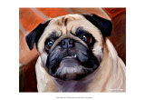 Snaggle Pug Prints by Robert Mcclintock