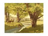 Deer in the Woods Posters
