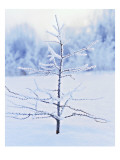Tree in Winter Snow and Ice Photo
