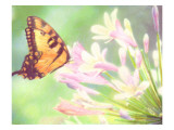 Butterfly and Pink Flowers Art