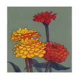 Zinnia Flower Prints